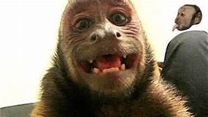 Monkey Mondays With Monkeyboo   3