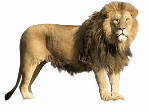 Lion transparent background image animal web design graphics