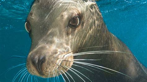 seaworld launches meet  animals ad campaign travel