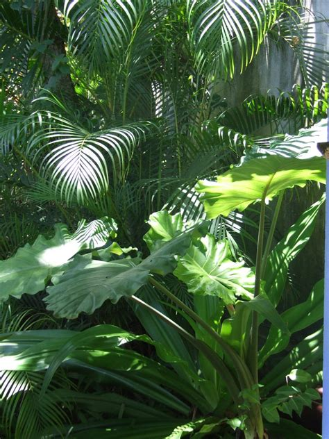 beginners tropical garden discussing palm trees