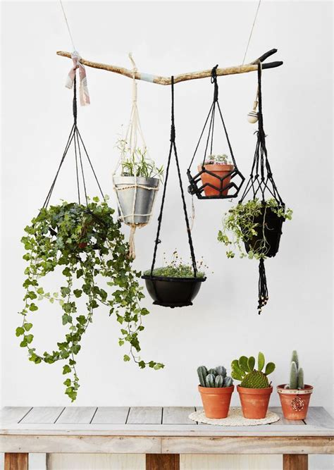 les 25 meilleures id 233 es concernant plantes sur plantes grasses jardin de plantes