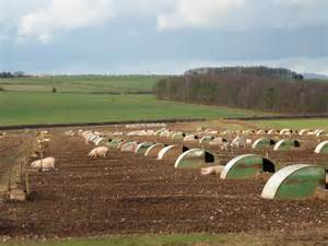 Nursery Wallingford by Sow Units Fawley Farms Limited