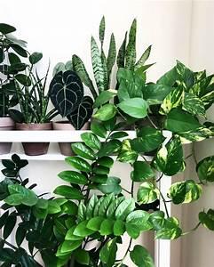 trendy, houseplants, for, an, indoor, sanctuary