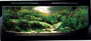 aqua design amano aquatic aquascaping aquarium