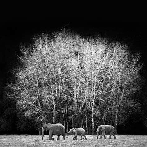 Print 51 Marina Cano Marina Cano Elephant World