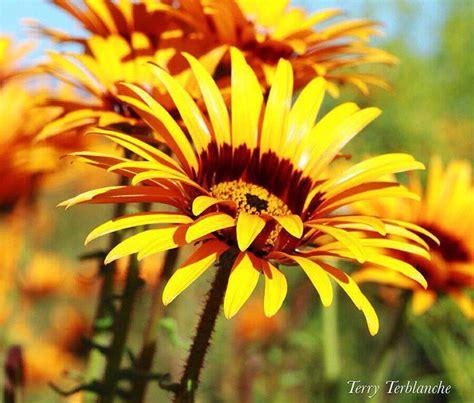 namaqualands sensational spring season africa geographic
