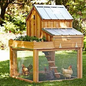Dimension poulailler 2 poules - Poulailler