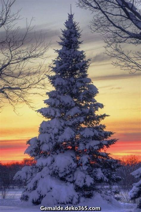 schoene winterbilder schoene bilder selbstdesign bilder
