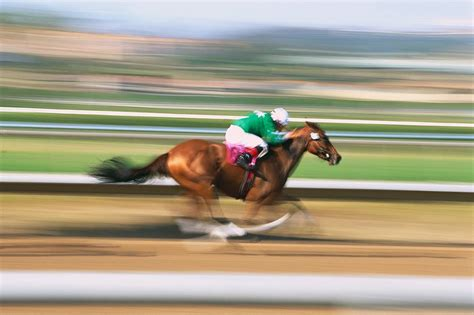 fast horses horse race ride racehorse bruising arnica racing run speed track thoroughbred got health horseback