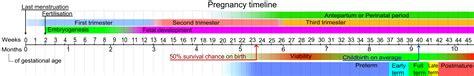 pregnancy calendar templateadoption wiki
