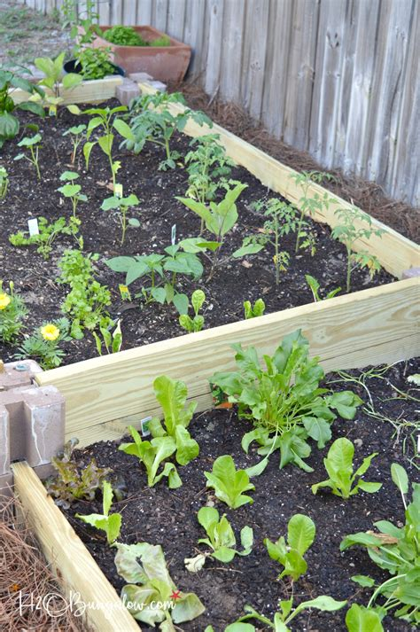 build a raised garden bed how to build a raised vegetable garden bed h20bungalow
