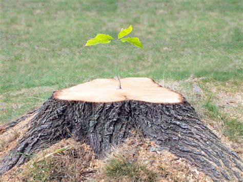 3 Reasons To Invest In Stump Removal  Childers Tree