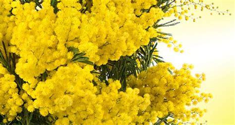 fiori 8 marzo festa della donna fiori a monza consegna a domicilio