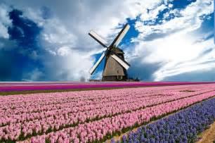 Netherlands Holland Windmill Tulips