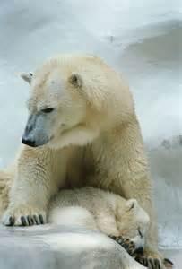 Polar Bear Cross Stitch Patterns