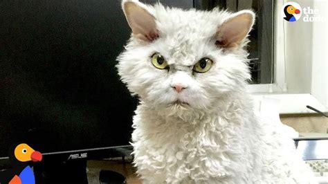 grumpy cat illustrates  stages