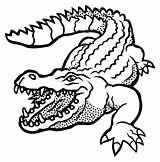 Crocodile Alligator Drawing Clipart Lineart Clip Outline Line Coloring Cartoon Vector Pages Svg Silhouette Krokodil Drawings Na Printable Alligators Transparent sketch template
