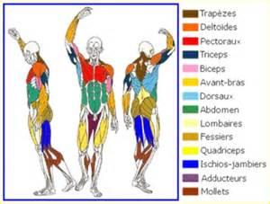 les muscles tpe le sport intensif
