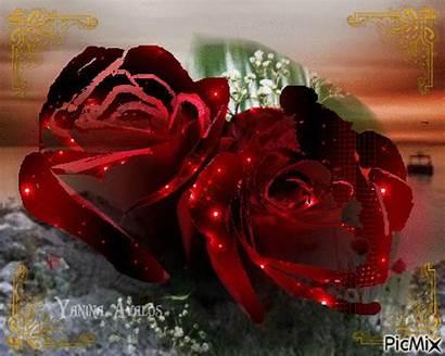 Picmix Roses