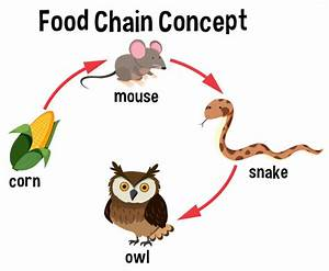 Food Chain Concept Diagram Vector
