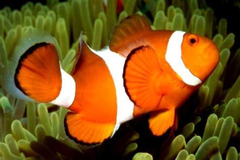 fibonacci sequence great barrier reef beauty underwater