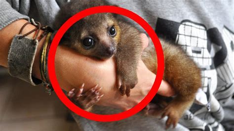 CUTEST Exotic Pets You Can Legally Own YouTube