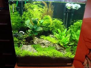 Aquarium Einrichten 60l : aquarium von christoph luz nano cube 60 liter ~ Michelbontemps.com Haus und Dekorationen