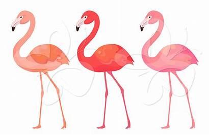 Flamingo Clip Clipart Flamingos Library Google Bird