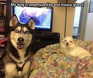 Pinterest Animals Funny