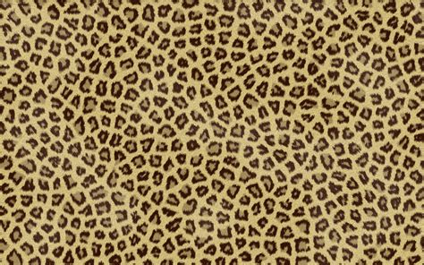 Free Animal Print Wallpaper Background - animal owl backgrounds free desktop