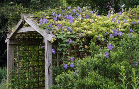 Kletterpflanzen Immergrün Winterhart by Immergr 252 Ne Kletterpflanzen Unsere Top 7 F 252 R Den Idealen