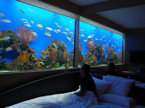 nine of the best aquariums around the world you shouldn t miss out on