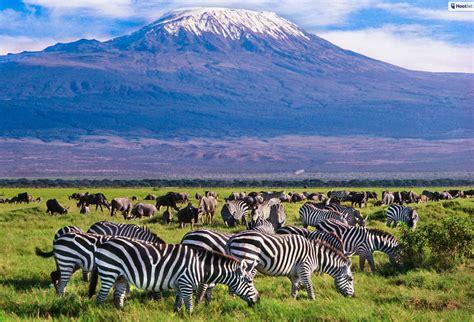 5+ Best African Safari Specials Post-Covid-19 (Kruger ...