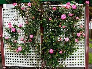 Jardiniere Avec Treillis Carrefour : bac fleurs avec treillis produit maison carrefour car ~ Dailycaller-alerts.com Idées de Décoration