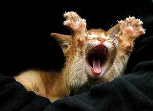 20 Cutest Yawning Animals