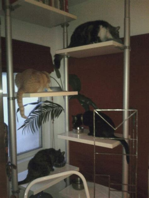 stolmen cat feeding station cat tree ikea hackers