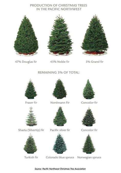 a noble or douglas fir 7ft led tree best 25 fraser fir tree ideas on tree tree