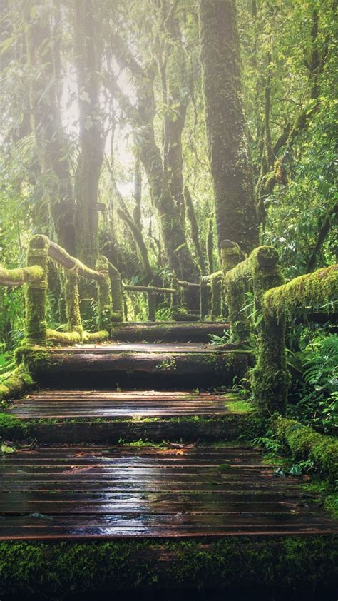 Green Forest Photo Hd by Wallpaper Forest Green 5k Nature 19712