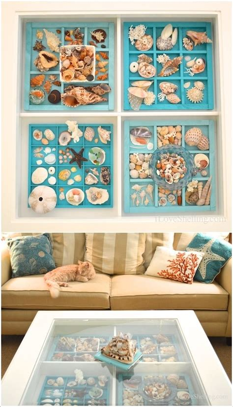 how to display shells ideas best 25 shell display ideas on pinterest shell collection seashell display and have a nice