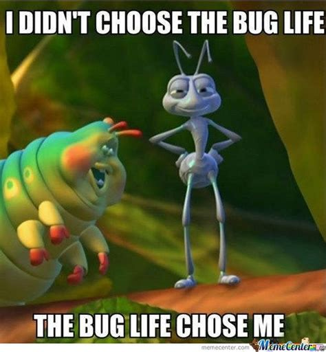 Bug Memes - 1000 images about bug funnies on pinterest roaches the fly and funny friday memes