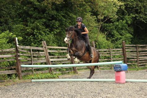 riding horse prices lesson lessons bristol