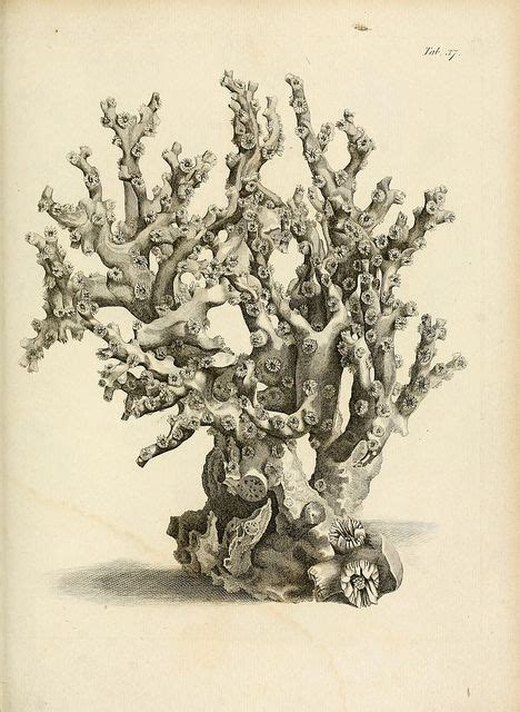 Biodivlibrary Flickr Somewhere For The