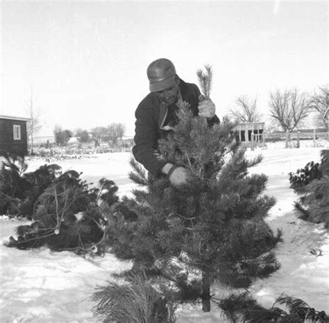 cut your own christmas tree illinois photo albums
