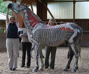 17 Best Images About Horse Anatomy  Graphic  On Pinterest
