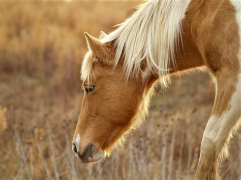 horse animals animal names grazing horses pony pexels wildlife equine depressed foal colt stallion mane mammal mare signs pasture royalty