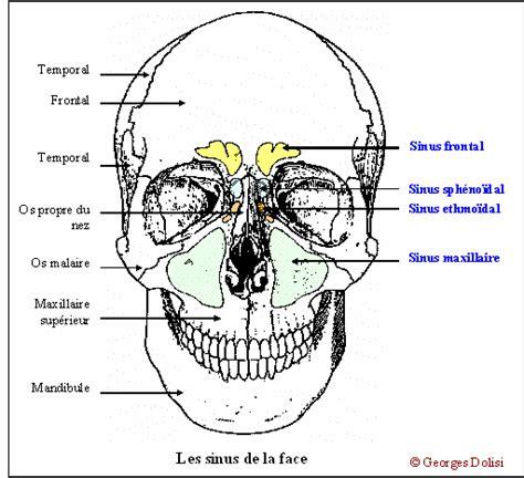 interieur du nez odorat le corps humain