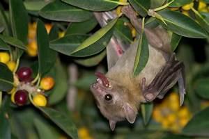 Josh's Blog: Egyptian Fruit Bats