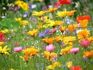 Graines Fleurs Des Champs : voil le printemps fleurs des champs graines de fleurs fleurs et fleurs sauvages ~ Melissatoandfro.com Idées de Décoration