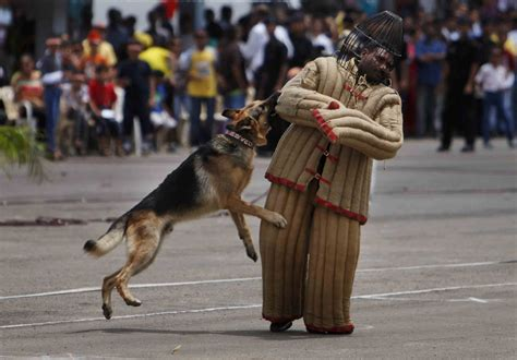 Indian Army Dog Squad