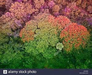 Rote Blätter Baum : bunte b ume in mittelamerika luftbild gr ne und rote ~ Michelbontemps.com Haus und Dekorationen